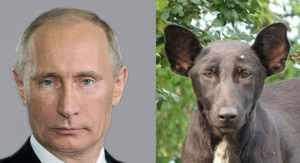 PutinDog1